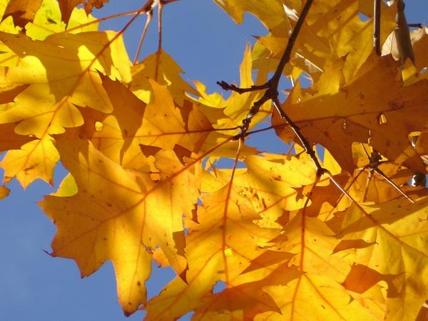 Pożyczka na jesień